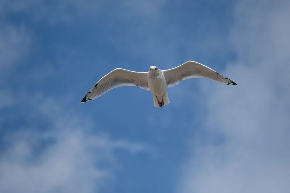 fujixt2_bird3_2000