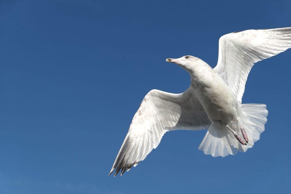 panalx15_bird1_1890