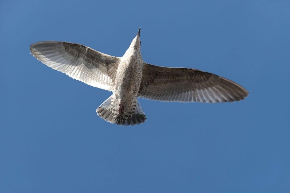 panalx15_bird2_1890