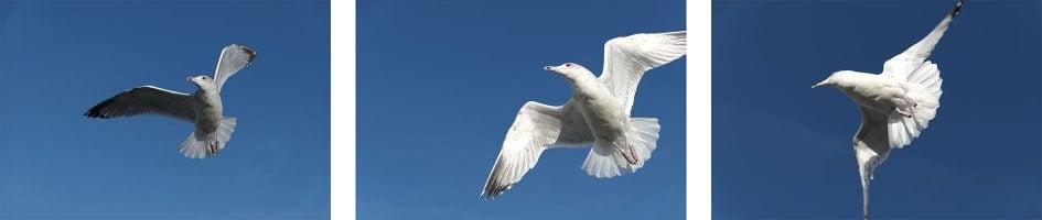 panalx15_birds_burst1_1890