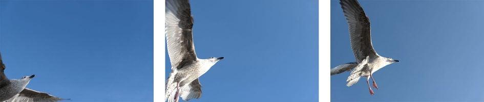 panalx15_birds_burst2_1890