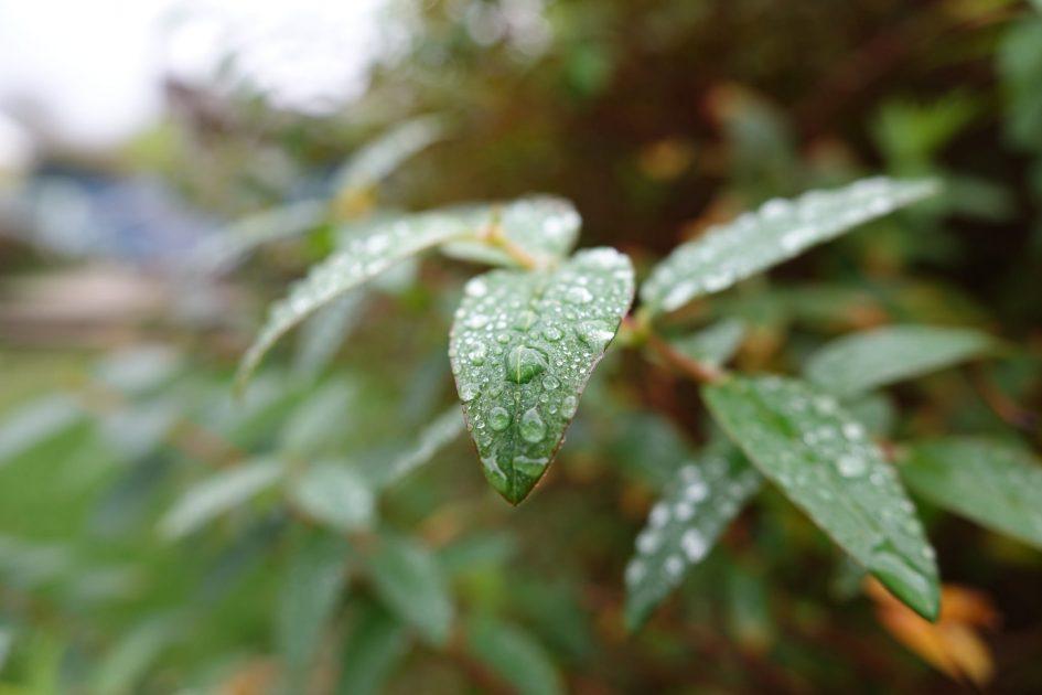 sonyrx10ii_leafs_2048px
