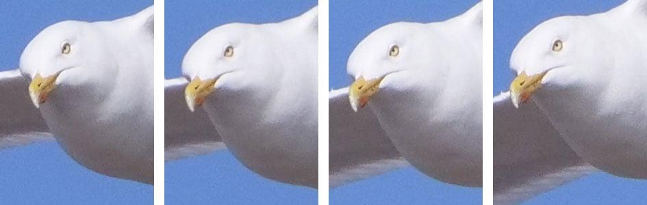 PanaGH5_CAF_bird_row2