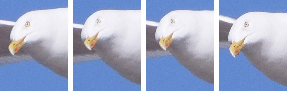 PanaGH5_CAF_bird_row4