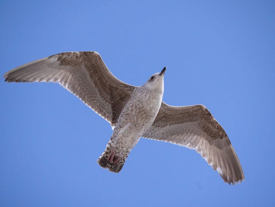 Pana_GH5_bird