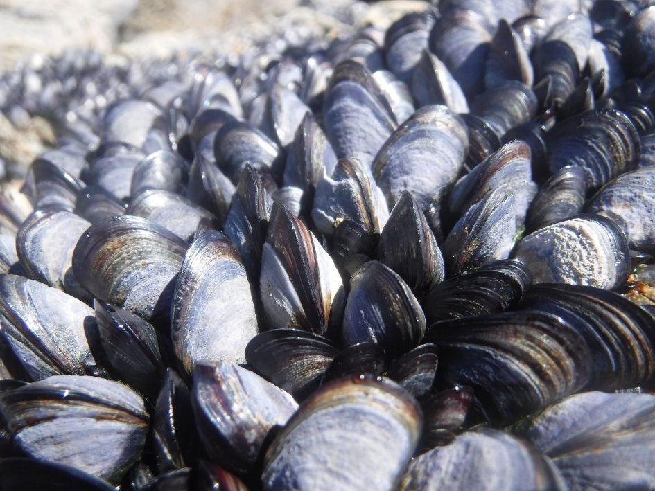 finepix_xp120_mussels_1890px