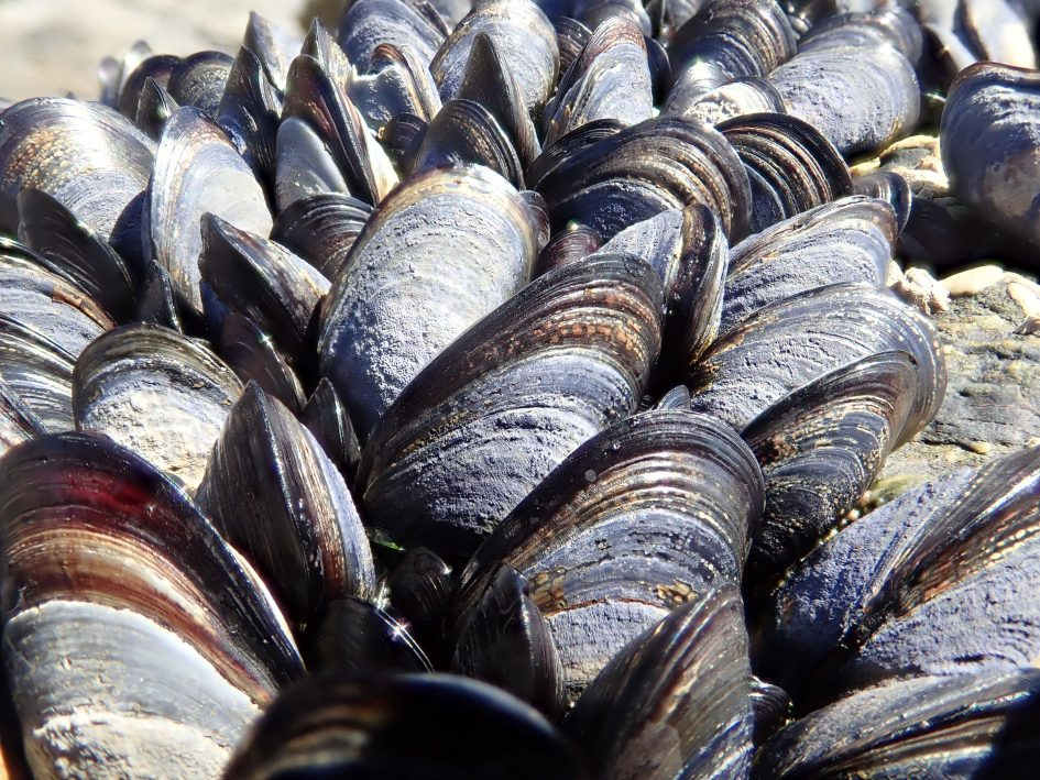 tough_tg5_mussels_stacked_1890px