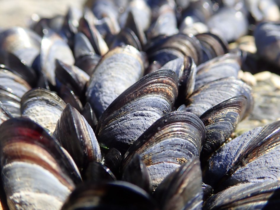 tough_tg5_mussels_unstacked_1890px