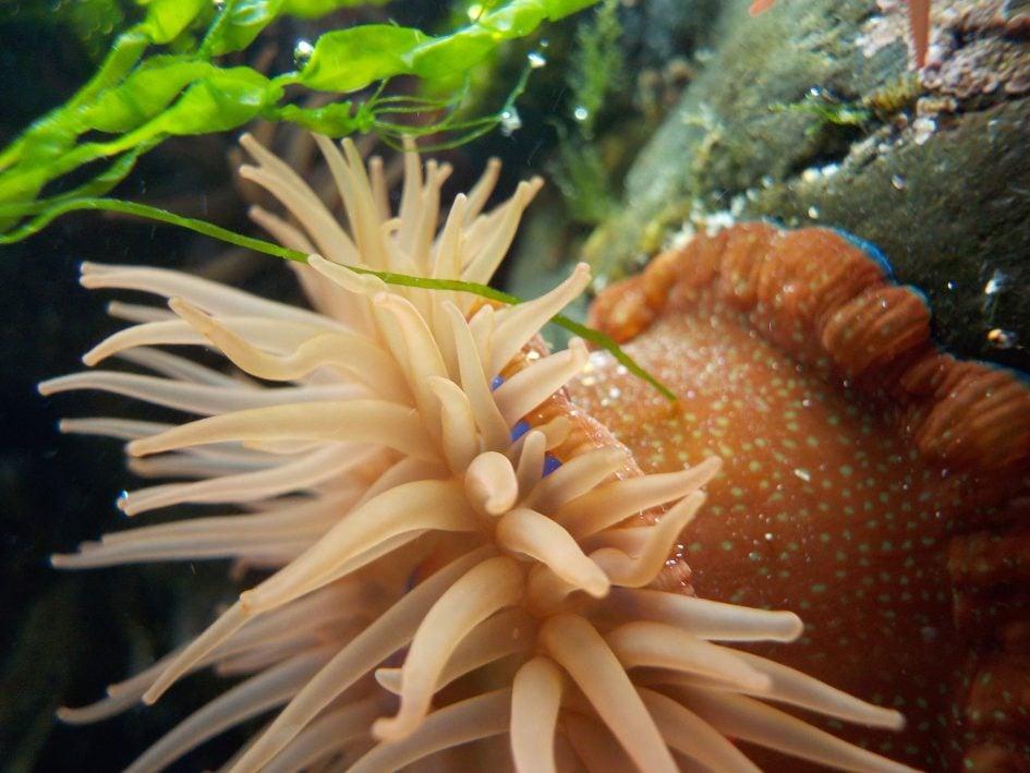 nikon_w100_underwater_macro_1890px