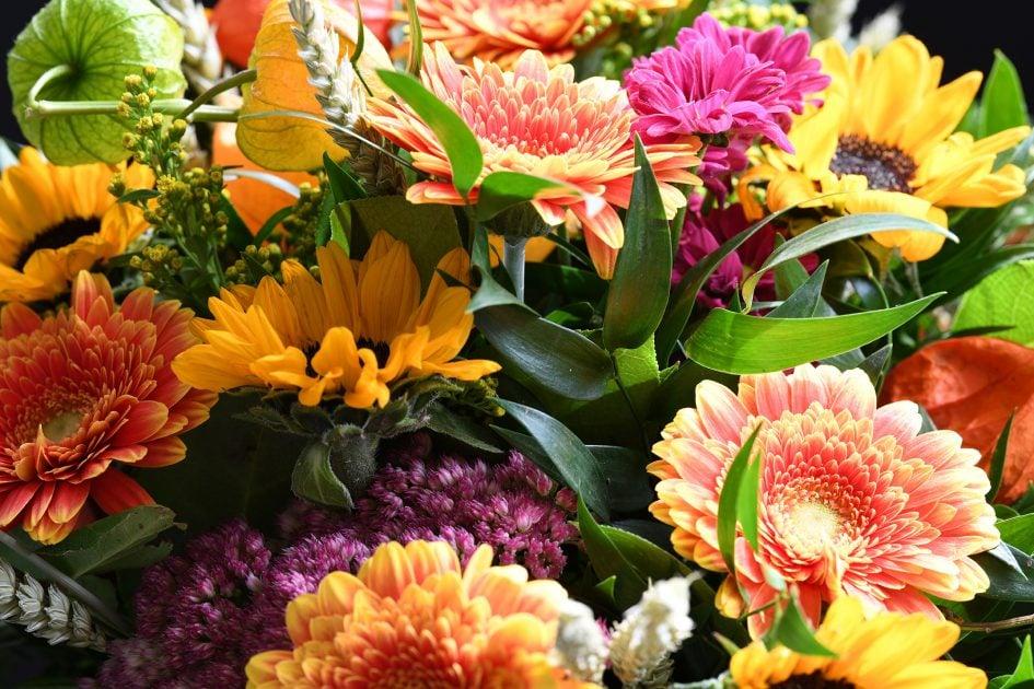 nikon-d850-sample-flowers