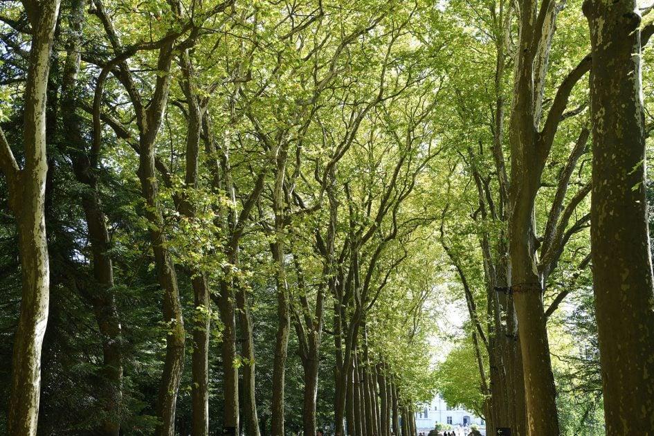 nikon-d850-sample-trees