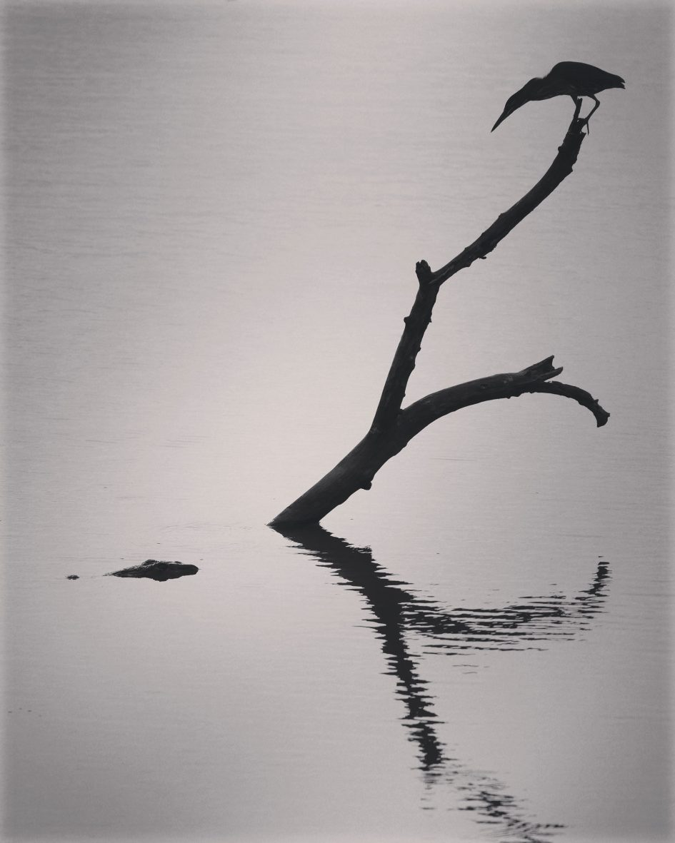 panasonic-lumix-g9-leica-200mm-safari-bird-croc