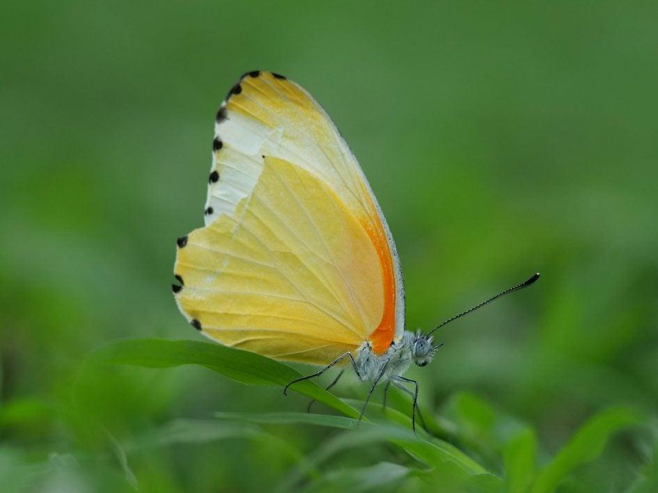 panasonic-lumix-g9-leica-200mm-safari-butterfly
