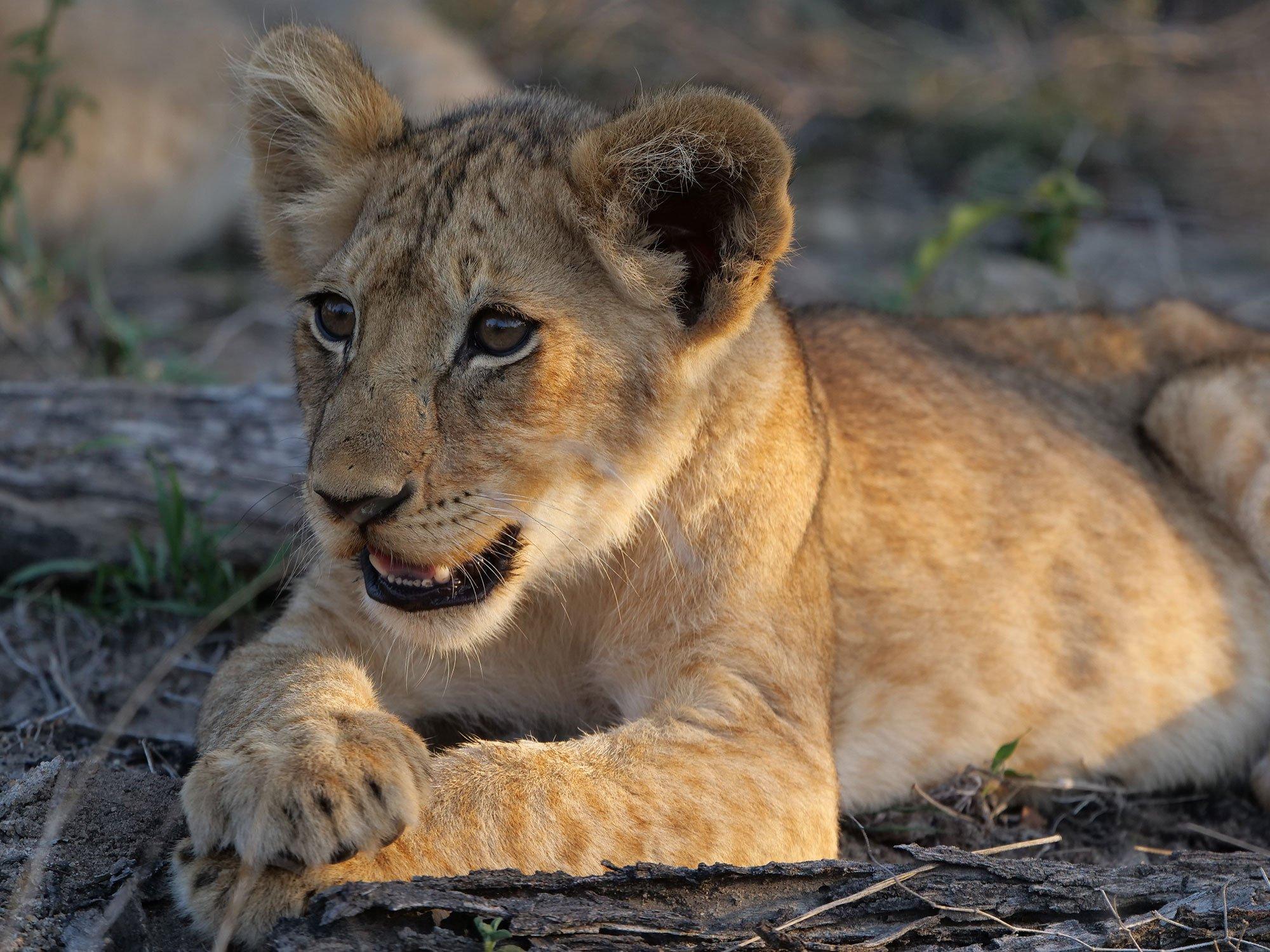 South Africa Safari Photography - | Cameralabs