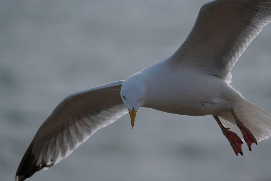 fujifilm-xf-seagull-1