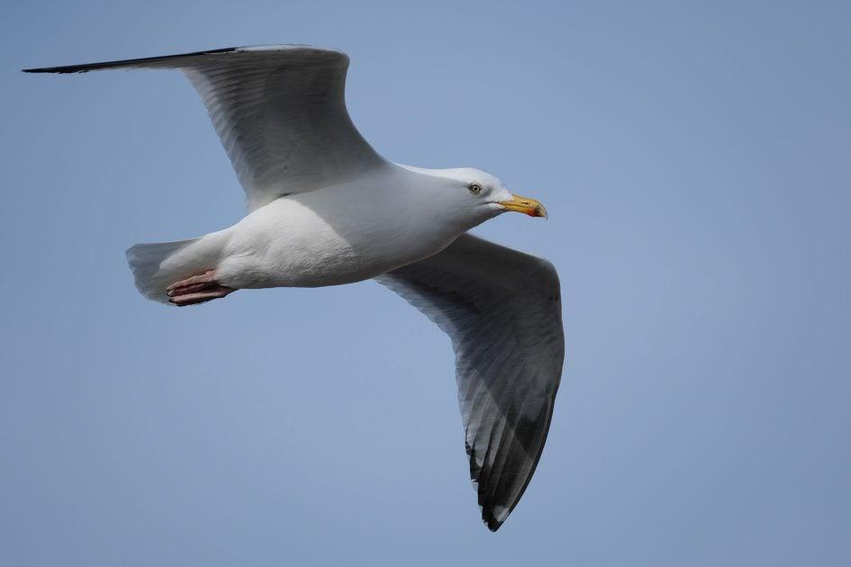fujifilm-xh1-seagull-1