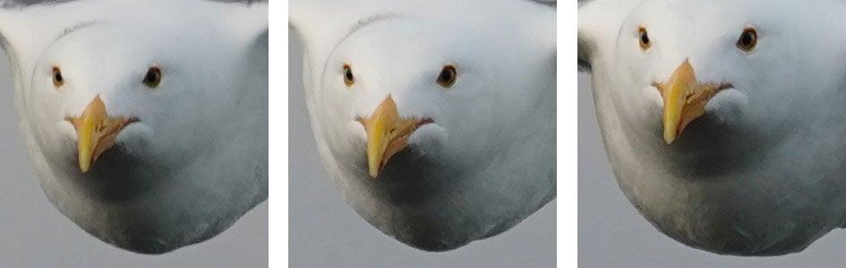 sony-a7-iii-bird-crops1