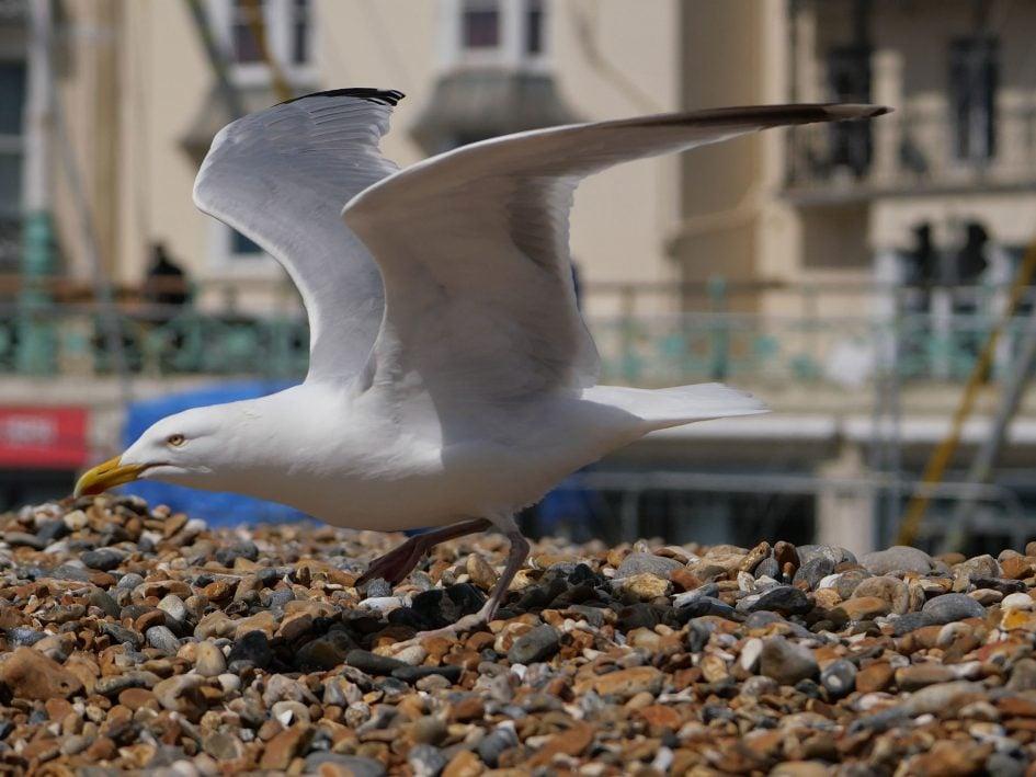 panasonic-lumix-gx9-4k-seagull