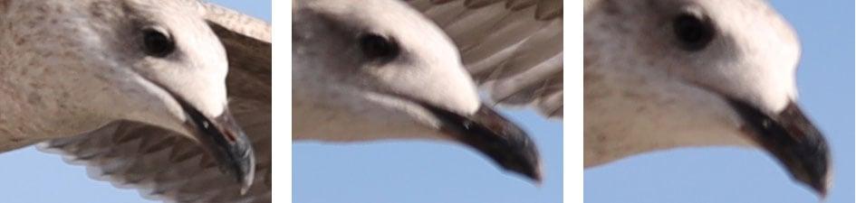 canon-eos-r-birds-crops1
