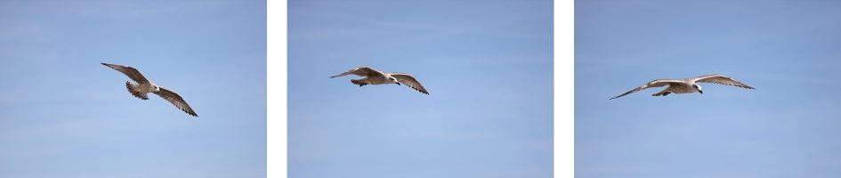 canon-eos-r-birds-row1