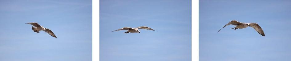 canon-eos-r-birds-row2