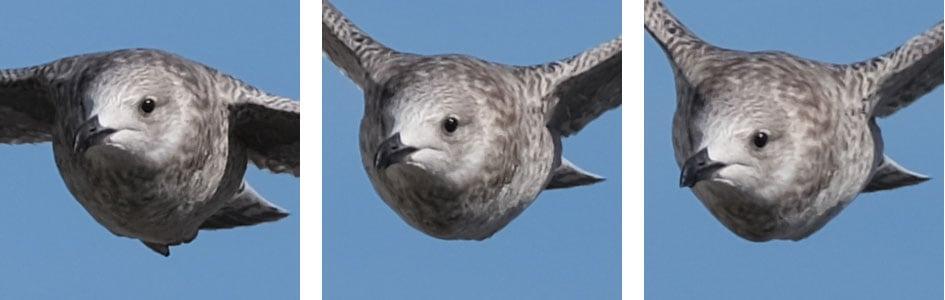 fujifilm-xt3-bird-crops1
