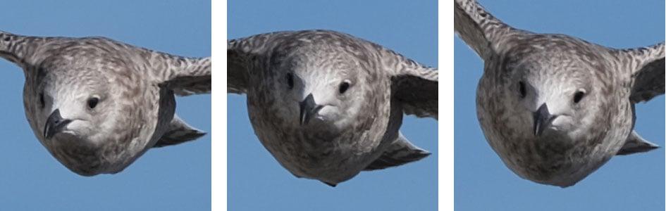 fujifilm-xt3-bird-crops2