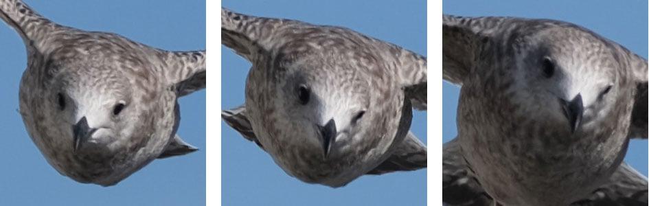 fujifilm-xt3-bird-crops3
