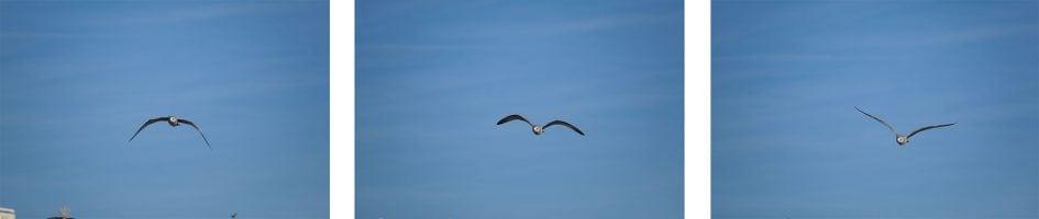 fujifilm-xt3-bird-row1