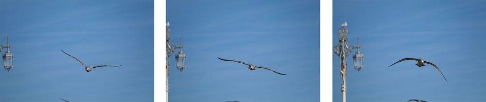 fujifilm-xt3-bird-row3