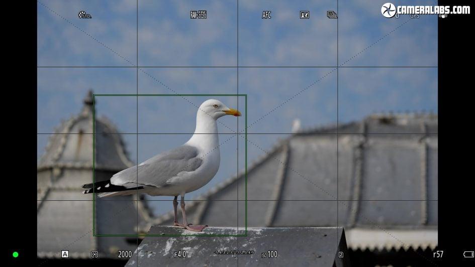 panasonic-lumix-s1-review-bird-af