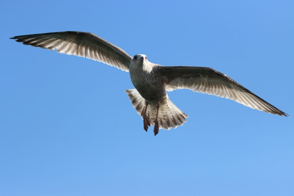 canon-eos-90d-sample-image-IMG_0732